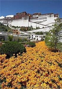 Flowers near the Potala Palace