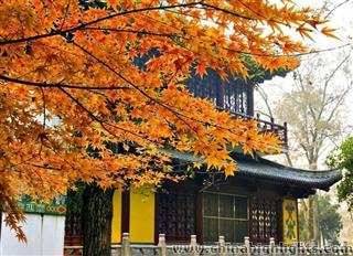 Best Places to see Fall Foliage in Shanghai