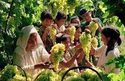 Xinjiang Grape Festival