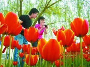 Best Places to Go to See Flowers in Beijing
