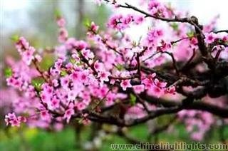Chengdu International Peach Blossom Festival