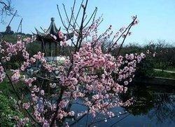 Suzhou Taihu Lake Plum Blossom Festival