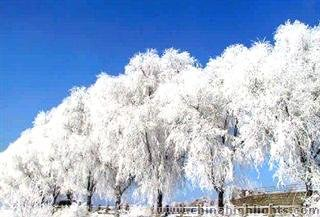 The Rime Scenery of Jilin