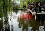 Viewing Fish at Hua Resort Huagang Huagang