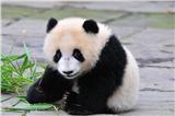 Bifengxia Panda Base