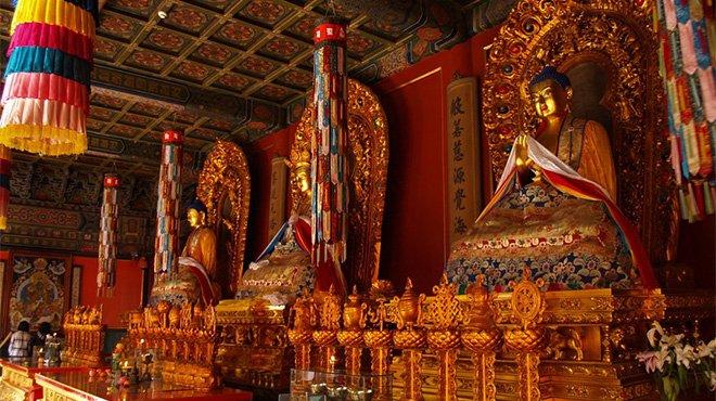 Beijing Panda Garden Lama Temple Hutongs And Olympic