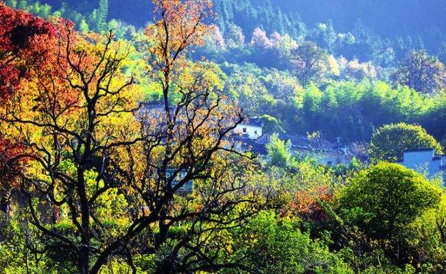 Tachuan in fall