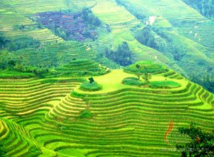 Summer scenery of the terraced fields