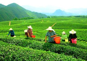 China's Top Tea Culture Cities