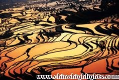 China's Five Most Beautiful Rice Terraces