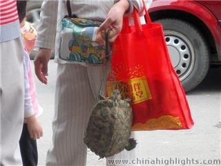 turtle in a bag to be used as food in China