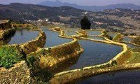 yuanyang terraced fields yunnan