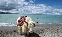 lake namtso tibet
