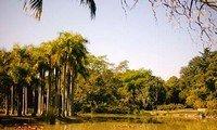 yunnan tropical botanical garden