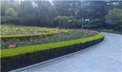 Fuxing Park – The Rose Garden