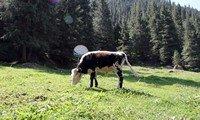nanshan pasture xinjiang