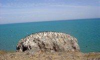 bird island qinghai lake