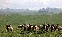 sangke grassland xiahe gansu