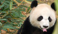 Facts You Should Know Before Traveling to Chengdu