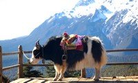 yunnan lijiang jade dragon snow mountain
