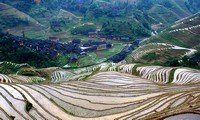 rice terraces in longji guilin