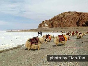 Walking on the peninsula to appreciate the beauty of Lake Namtso
