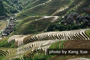 longji terraced fields