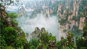 The forest park of zhangjiajie