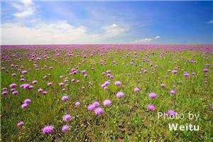 Hulunbuir Grasslands