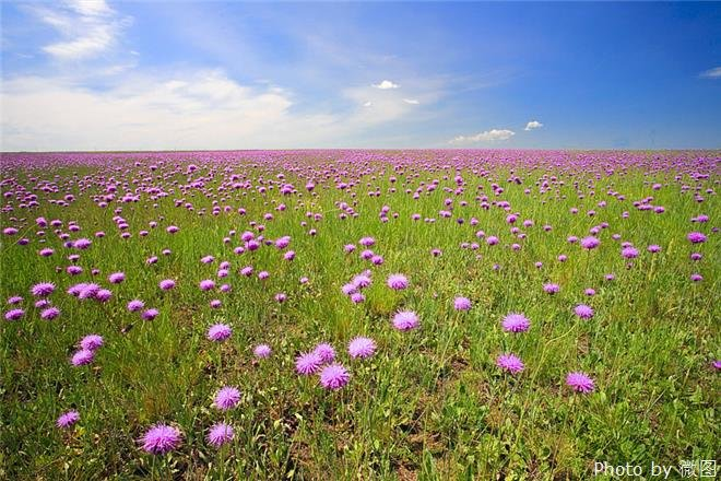 The Hulun Buir Grassland