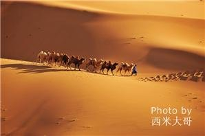 Gurbantunggut Desert