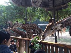 Changlong Taronga Zoo