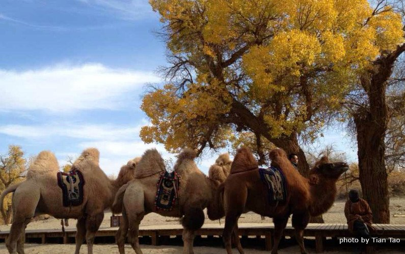 Eji'naqi en Mongolie Intérieure