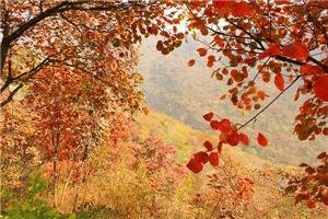 Autumn leaves in the Fragrant Mountains