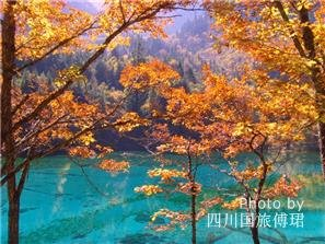 Best Places to See Fall Foliage in Chengdu