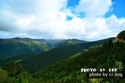 foresta lulang tibet