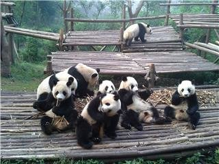 Chengdu Giant Panda Breeding and Research Base