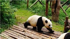 The Top 7 Family-Friendly Activities in China