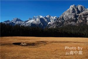 Spruce meadow on Jade Dragon Snow Mountain