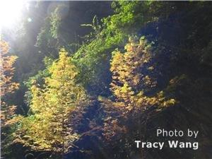 Wulong Karst in fall