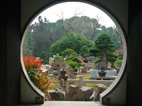 Bonsai Garden of Tiger Hill
