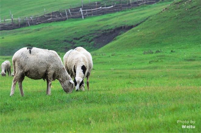 zhangbeibeishang grassland