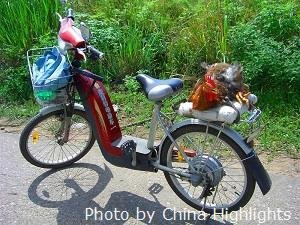 Ebike and chicken