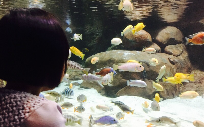 China's Top 5 Most Popular Aquariums and Ocean Worlds