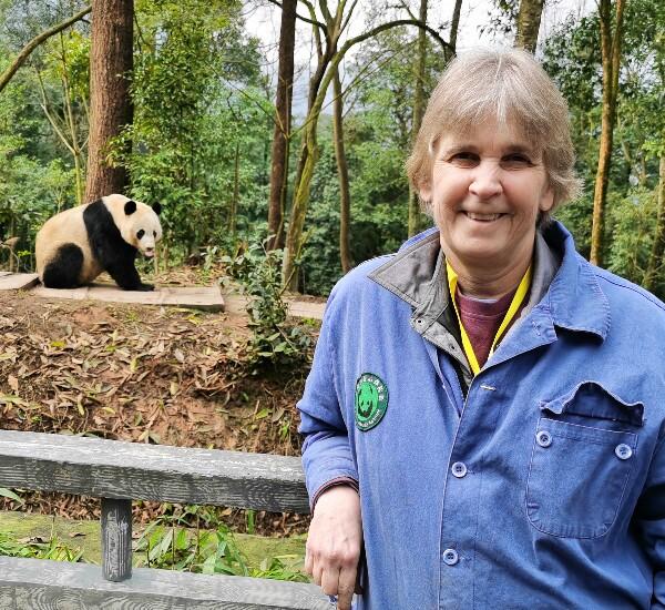 One Day Dujiangyan Panda Volunteer Program Tour