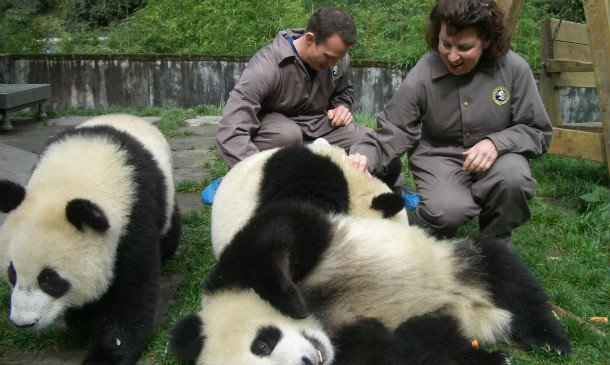 bifeng valley panda centre