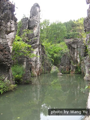 Stone forest in water