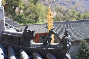 temple forest on Mt Wutai