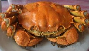 Hairy Crab — The Shanghai Delicacy Every Tourist Should Try