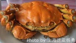 Shanghai Hairy Crab